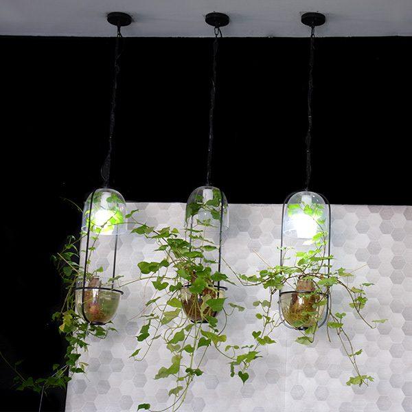 7813---Plant-Light